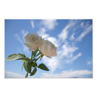 White Roses against Blue Sky Photographic Print