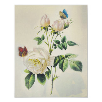 White Roses and Butterflies by Pierre Redoute Print