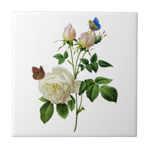 White Roses and Butterflies by Redoute Ceramic Tiles