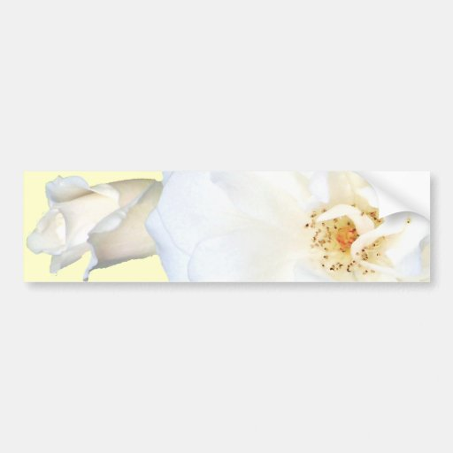 White Roses_ Bumper Sticker