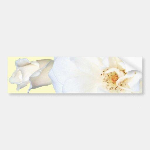 White Roses_ Bumper Sticker