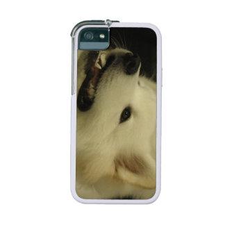 White Samoyed Dog iPhone 5/5S Covers