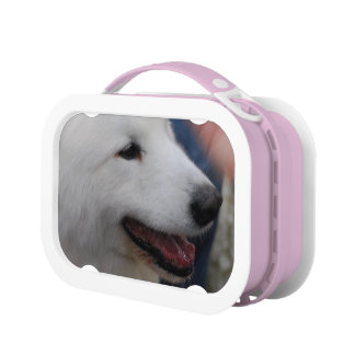 White Samoyed Dog Lunch Boxes