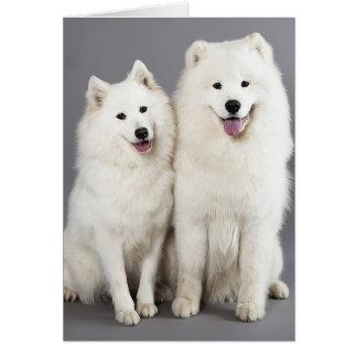 White Samoyed Puppy Dog - Hello, Thinking Of You Note Card
