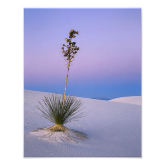 WHITE SANDS NATIONAL MONUMENT, NEW MEXICO. PHOTO PRINT