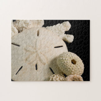 White Seashells And Sand Dollar Jigsaw Puzzle