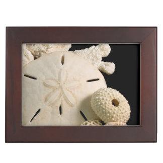 White Seashells And Sand Dollar Keepsake Box
