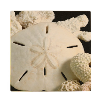 White Seashells And Sand Dollar Wood Coaster