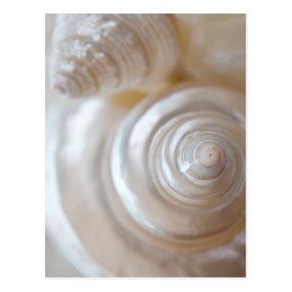 White Seashells Tropical Beach Sea Shells Coastal Postcard