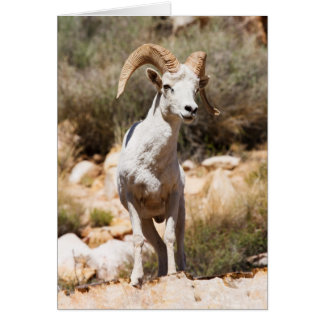 White Sheep Of The Family Greeting Card