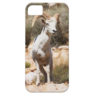 White Sheep Of The Family iPhone 5 Cover