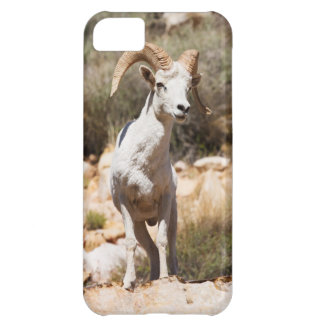 White Sheep Of The Family iPhone 5C Case