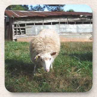 White Sheep on the Farm Coaster