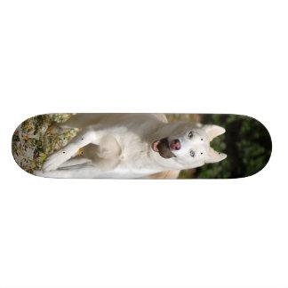 White Siberian husky skateboard