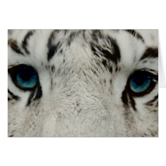 White Siberian Tiger Note Card