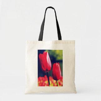 White Single late tulip, 'Halcro' flowers Bag