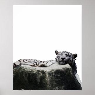 White snow Tiger - Big Cat sleeping Print