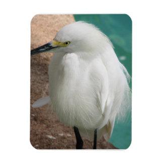 White Snowy Egret Magnet