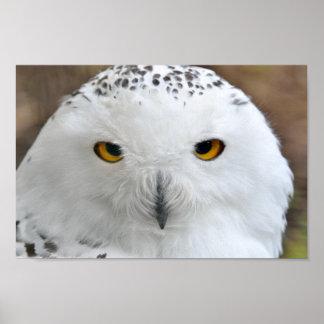 White Snowy Owl Bird Poster