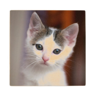 White Spotted Kitty Wood Coaster