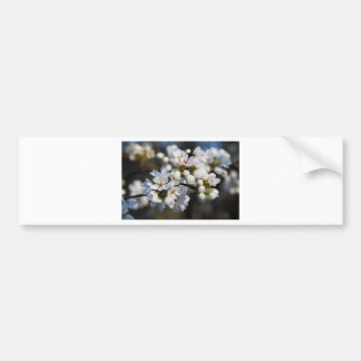White Spring Blooming Bradford Pear Blossoms Bumper Stickers