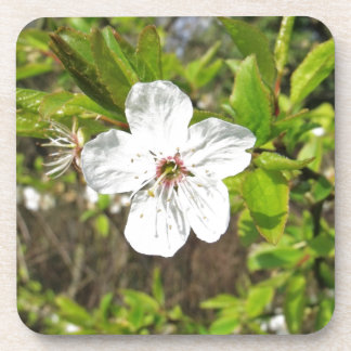 White Spring Blossom Beverage Coasters