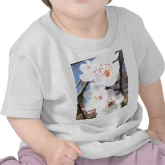white spring blossoms shirts