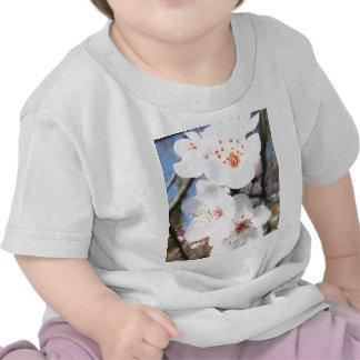white spring blossoms shirts