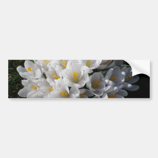 WHITE SPRING CROCUSES Bumper Sticker