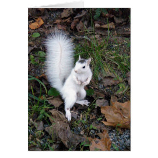 White Squirrel Card