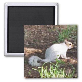 White Squirrel Magnet