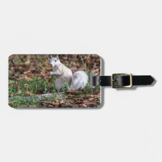 White Squirrel of Brevard Luggage Tag