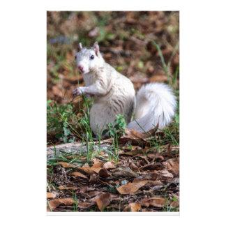 White Squirrel of Brevard Stationery