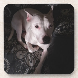 White Staffordshire Bull Terrier In Shadows Coaster