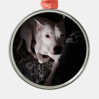 White Staffordshire Bull Terrier In Shadows Silver-Colored Round Decoration