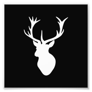 White Stag Head Photograph