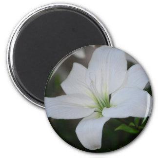 White Stargazer Lily Magnet
