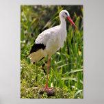 White stork among vegetation poster