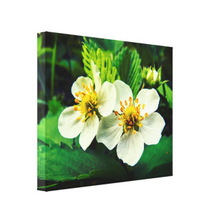 White Strawberry Flowers Macro Canvas Print