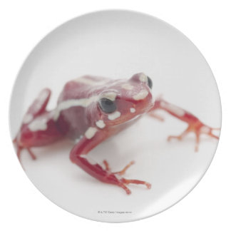 White-striped Poison Dart Frog 2 Plate