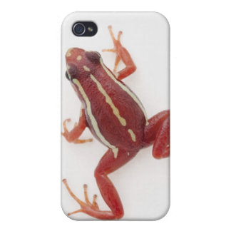 White-striped Poison Dart Frog Cover For iPhone 4