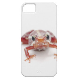 white-striped poison dart frog (epipedobates barely there iPhone 5 case