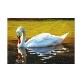White Swam Swimming On Lake In Autumn Canvas Print