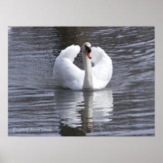 White Swan 1 Poster