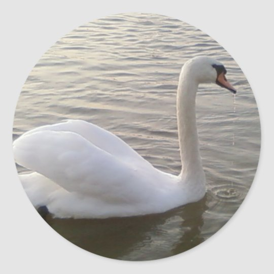 White Swan Close Up Picture Round Sticker