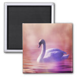 White Swan floating on a misty lake