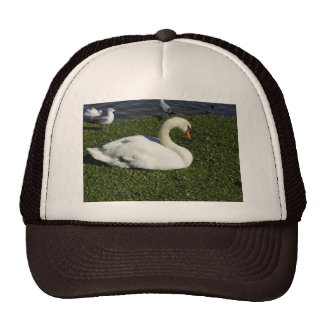 White Swan Hats