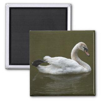 white swan square magnet