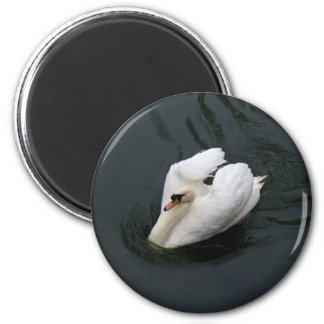 White Swan Refrigerator Magnets