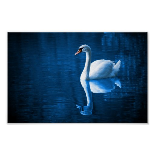 White Swan on Blue Waters Poster